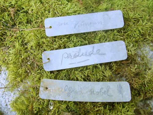 Plant Label A