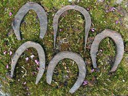 horse-shoes-c1-jpg