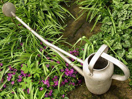 watering-can-d1-jpg