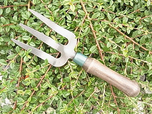 hand-fork-e1-jpg
